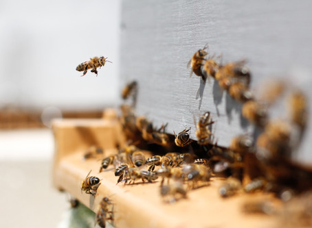 What your should know about local honey
