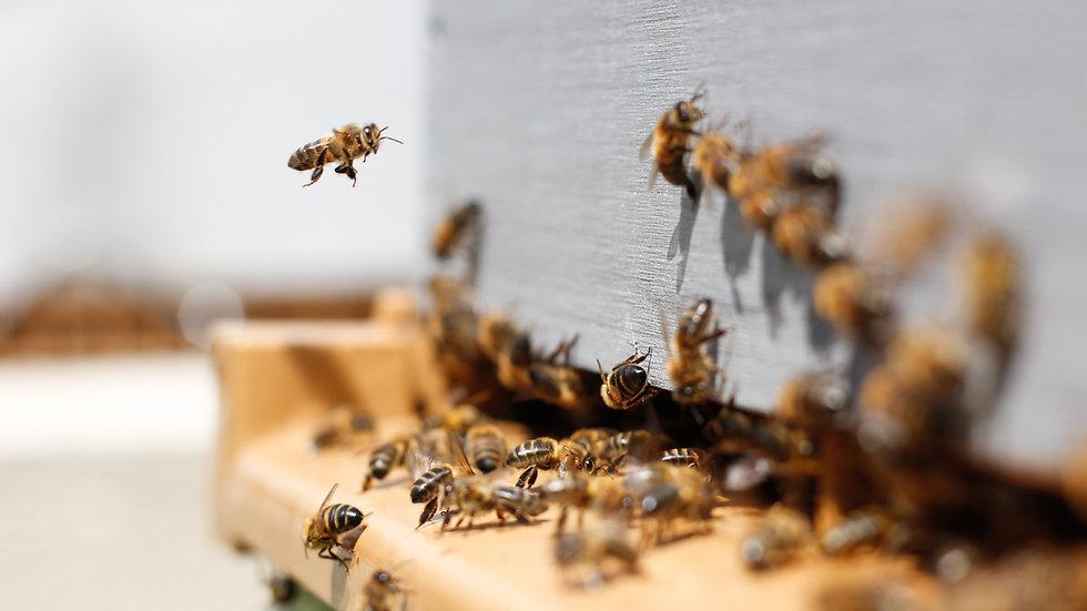 Parrainer 2000 abeilles