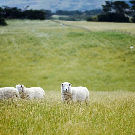 ウールとシルクのペルシャ絨毯の違いは?