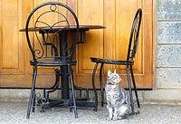 Gato cinzento sob a mesa de café