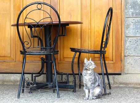 Dehors-dedans : votre chat est-il heureux ?