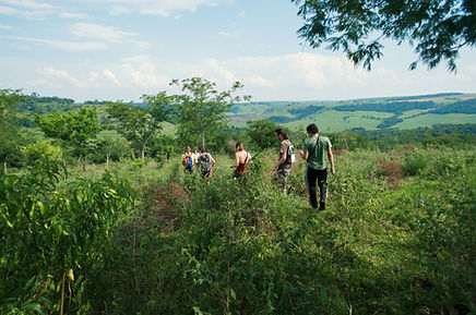 Marcher dans la nature