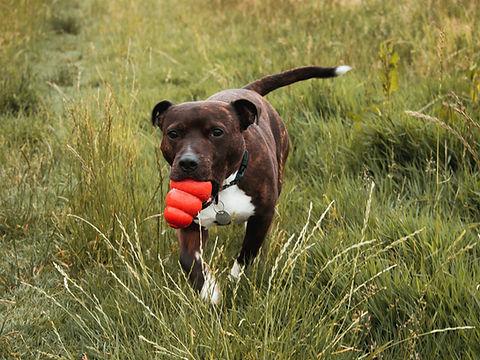 おもちゃの犬