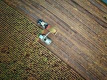 Harvesting Crop Field