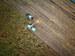 Ernte Crop Field