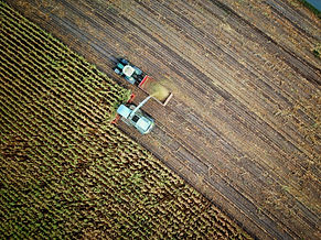 Harvesting Crop Field