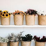 Plantas de flores