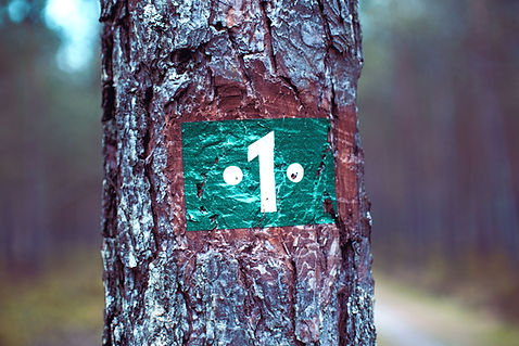 Numbering Trees