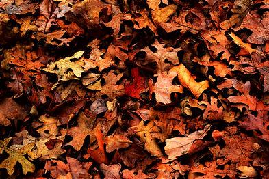 Paysagiste Services à la personne Vendée Les herbiers Saint Fulgent Les Epesses Sèvremont Ramassage des feuilles
