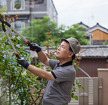 Trimming Leaves