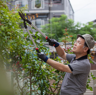Why You Shouldn't Prune in Fall
