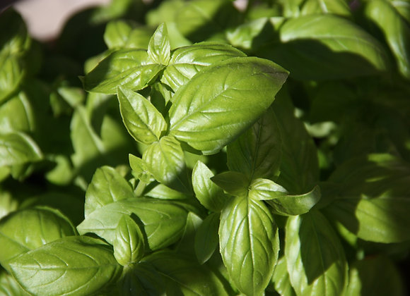 Packet Basil (per item)