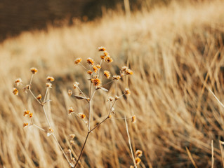 Norsif høsten 2020 - en oversikt