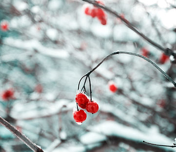 Tree Branch in the Snow