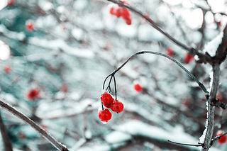 雪の中で木の枝