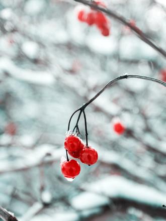 Winter Solstice Cheers