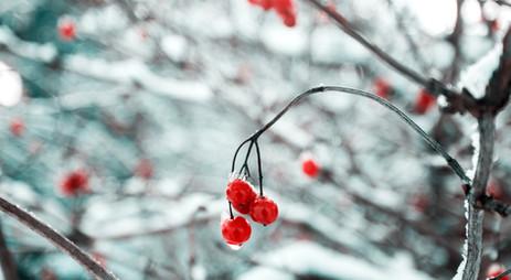 Upcoming Winter Masterclass