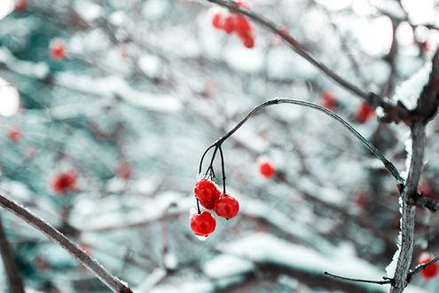 Branche d'arbre dans la neige