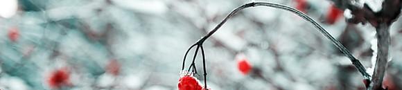 Winterspeis - NEU