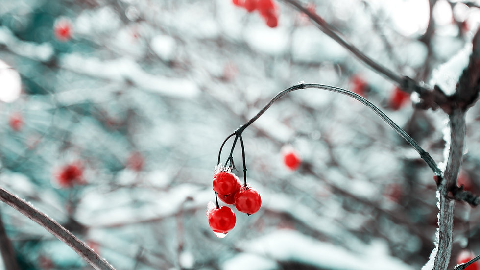 December 21 | 8:30pm - 9:30pm | Winter Solstice Meditation