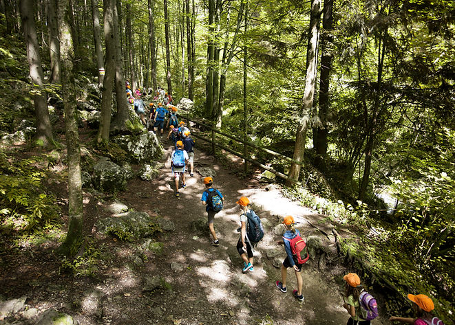 Gita scolastica nella foresta