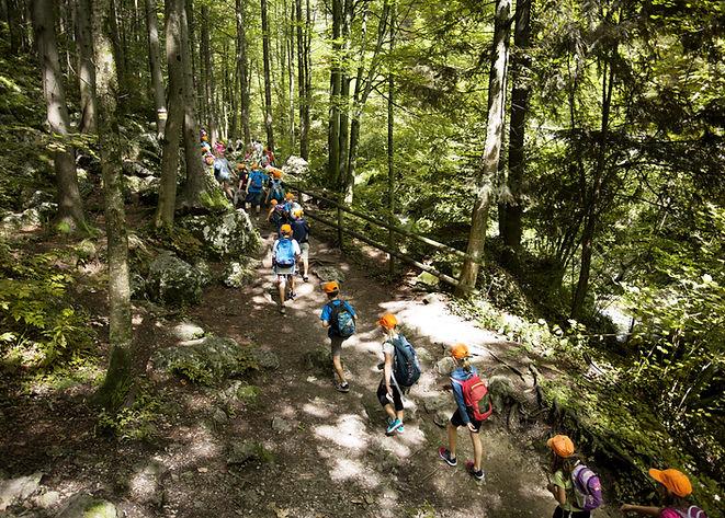 Viaje escolar en el bosque