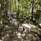 森の中の修学旅行