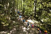 School group walking in Forest