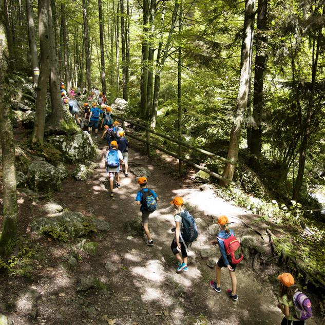 Skole tur i skogen