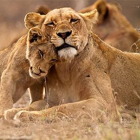 Predator's Love