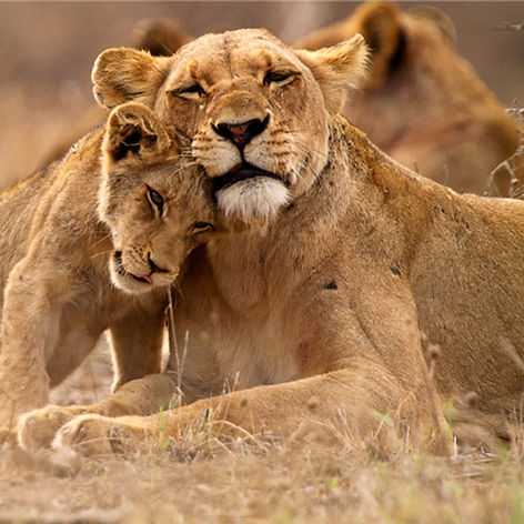 Predator ' s Love