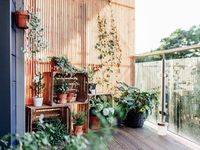 Complaints from neighbours about too many plants