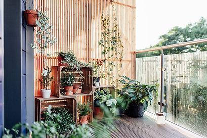 Plants on Terrace