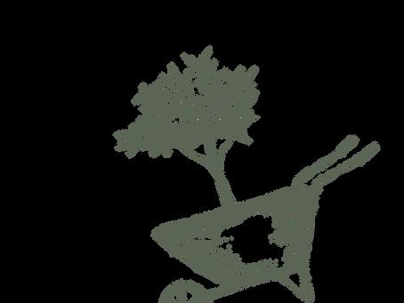 masal: bahçe