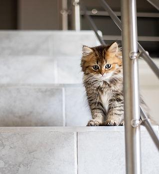 Kätzchen auf der Treppe