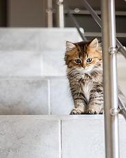Kattunge på trappan