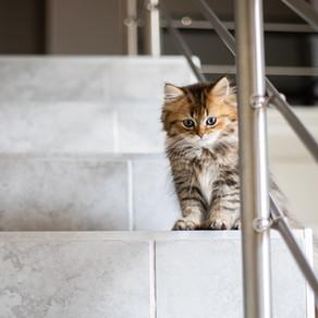 Sevrage du chaton