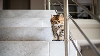 Chaton dans les escaliers