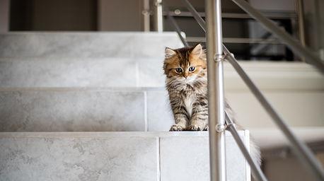 小貓在樓梯上