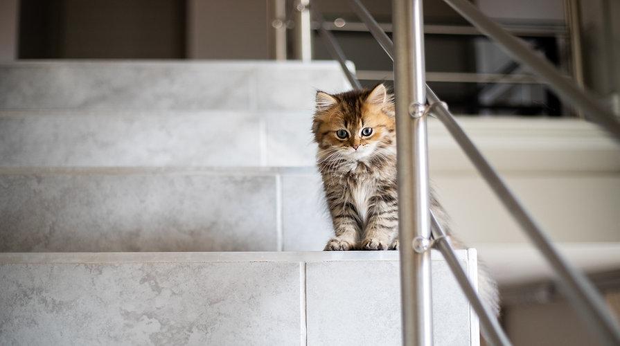 Katje op de trap