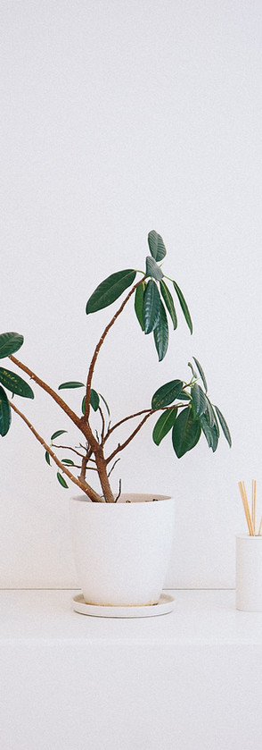 Plant in White Pot