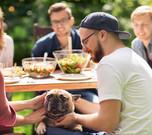 Pet Friendly Journeys Restaurants Europe