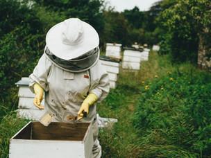 Il ruolo fondamentale delle api per il nostro ecosistema: novità dall'Europa