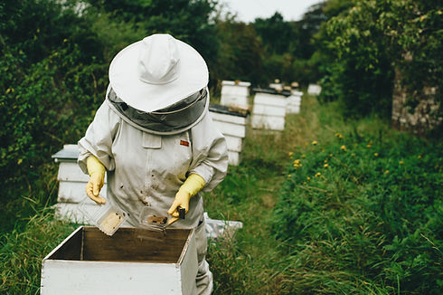 Beekeeper at Work