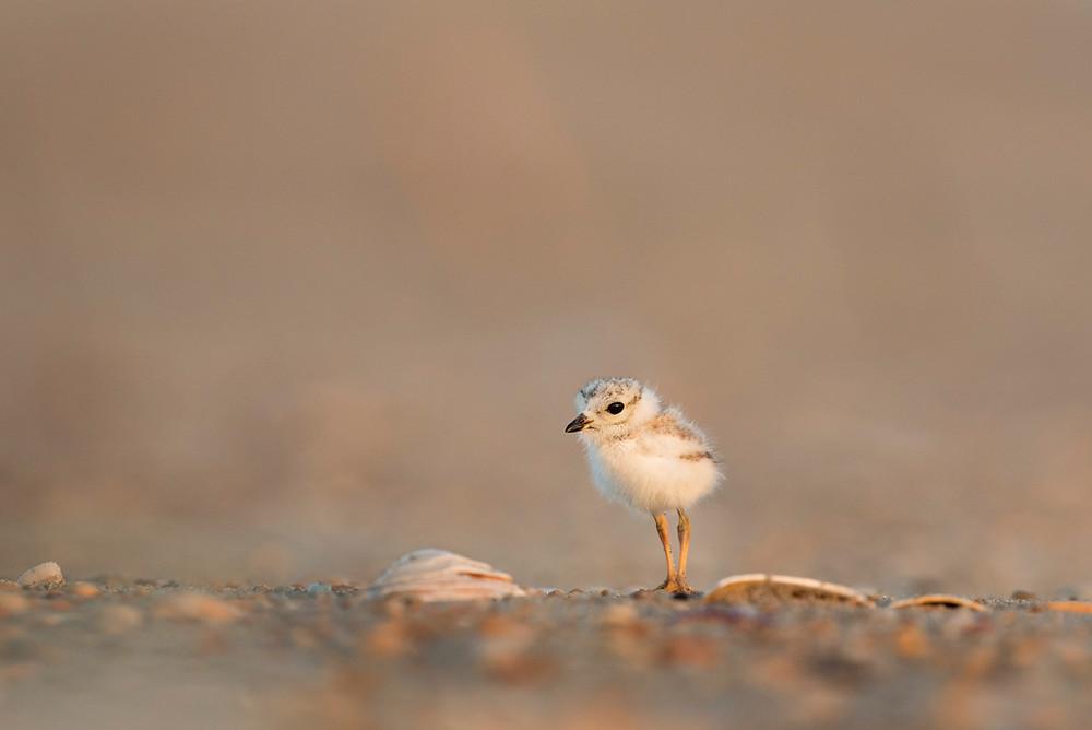 baby bird alone