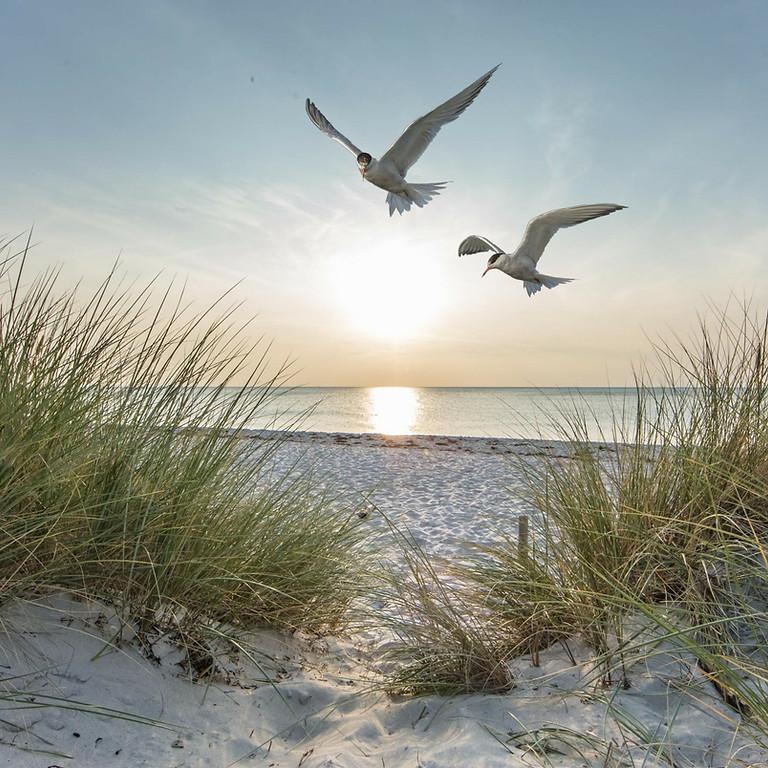 International Sand Dune Day