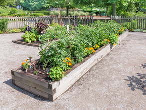 Plants to Pick for Raised Bed Gardens