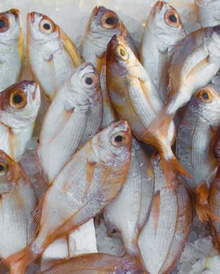 Seafood 2021