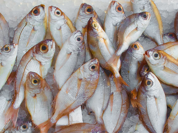 Fresh Fish in Sicily