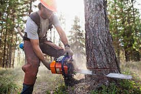 Lumberjack Cutting Down Trees